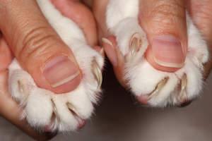 Cómo cuidar las uñas de los gatos