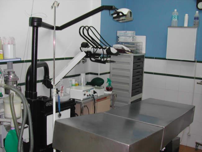centro veterinario en punta umbría huelva