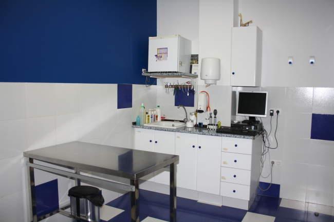 consulta veterinaria en castellón
