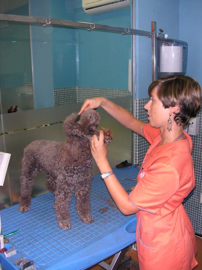 Peluquería canina en Ondara, Alicante