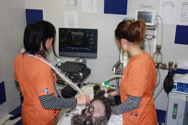 veterinarios en castellón