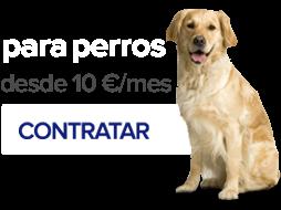 Contratar Nexoplan para perros desde 19 € al mes