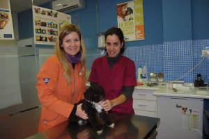 Centro veterinario nexo en Mérida