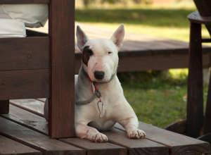 Cómo saber si un perro es peligroso