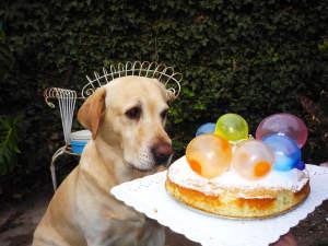 Verdades y mentiras sobre la edad de tu perro