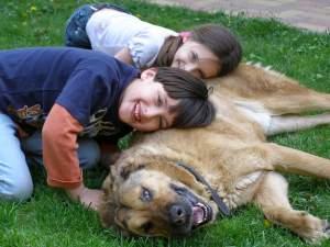 Cómo potenciar la felicidad de tu perro o gato