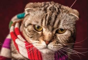 Cómo proteger a nuestras mascotas del frío