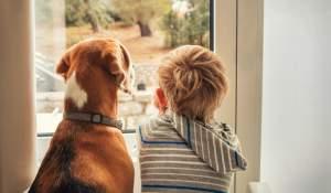 Divorcio, mascotas y estabilidad emocional para los niños