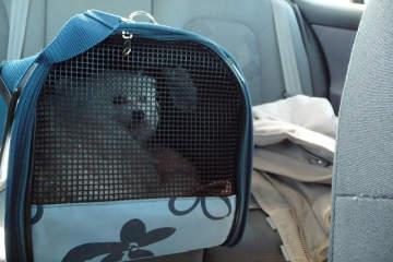 Cómo viajar de forma segura con tu mascota