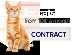 Contratar Nexoplan para gatos desde 19 € al mes