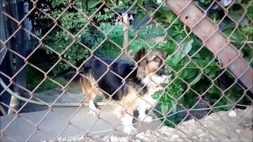 Qué hacer si nuestro perro ladra