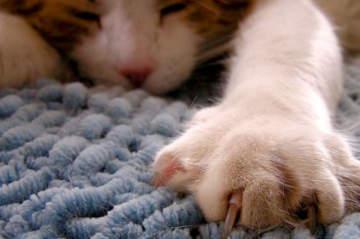 El gatito que araña el sofá (tiene solución)