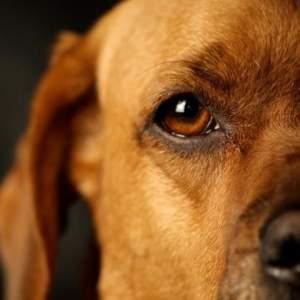 El ojo seco, la importancia de la lágrima